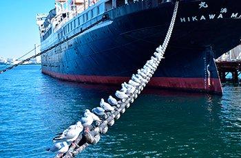 Доставка грузов из Японии